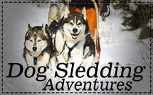 Dog-Sledding-Adventures-New-Menu-Photo-over