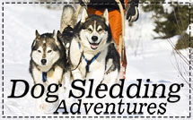 Dog-Sledding-Adventures-New-Menu-Photo